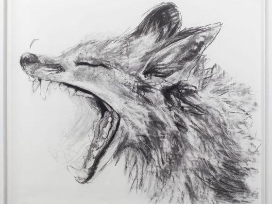 Urban fox (2012-2013)