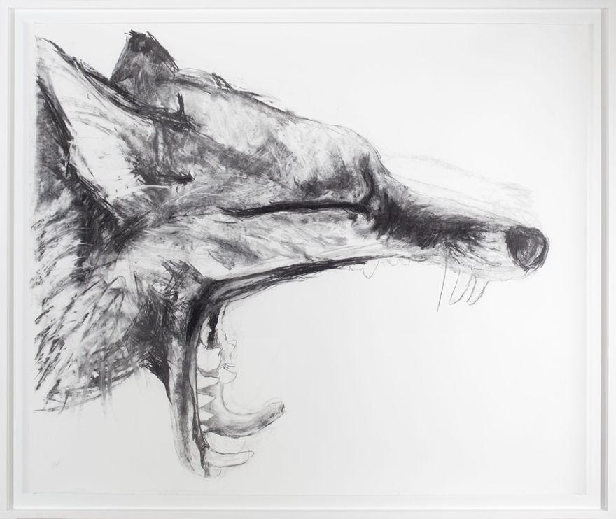 Urban Fox Studies series, 165cmx 195cm, Charcoal on paper, 2013