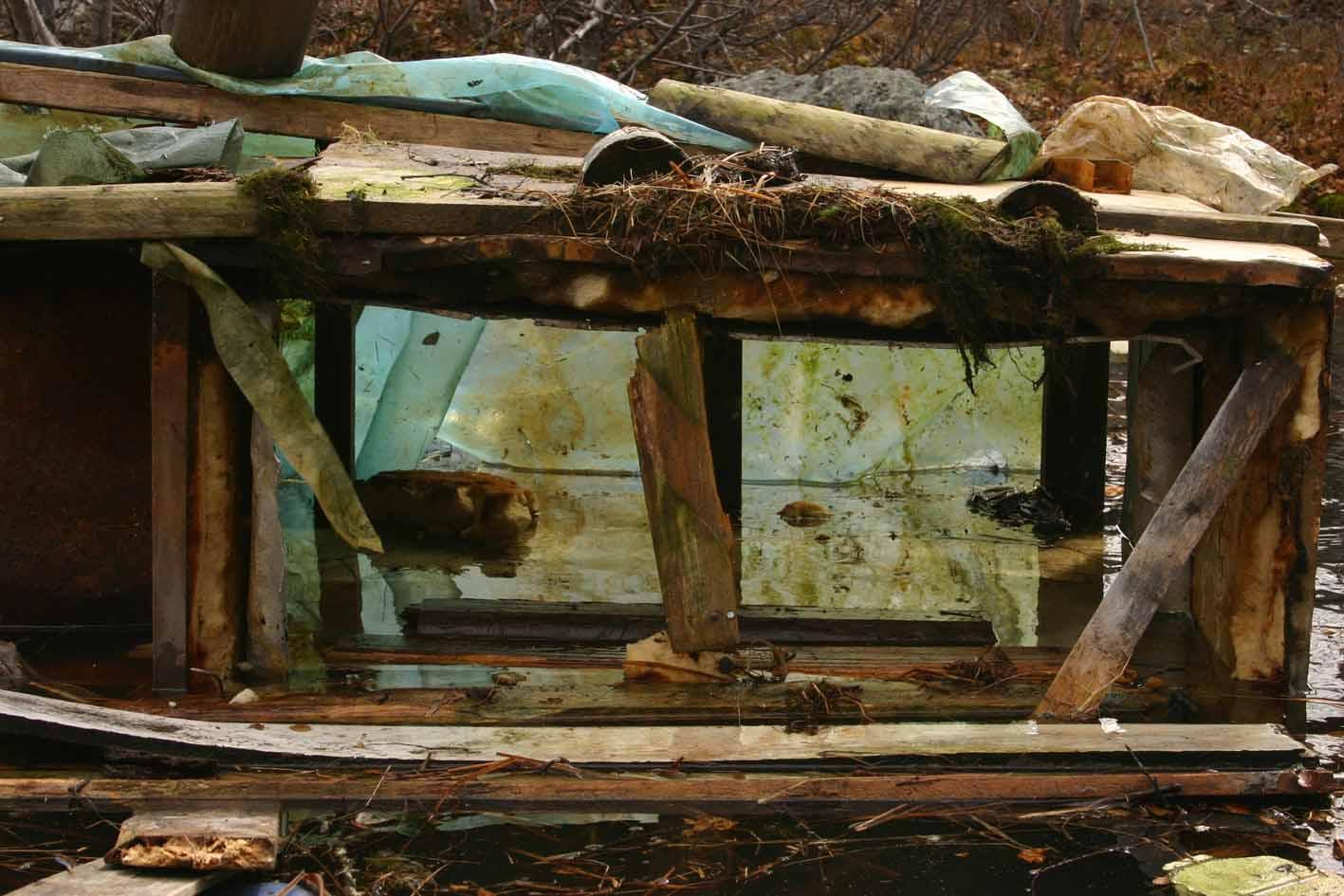 video still, Kilpisjärvi Biological Station, 2010, Jane Hughes