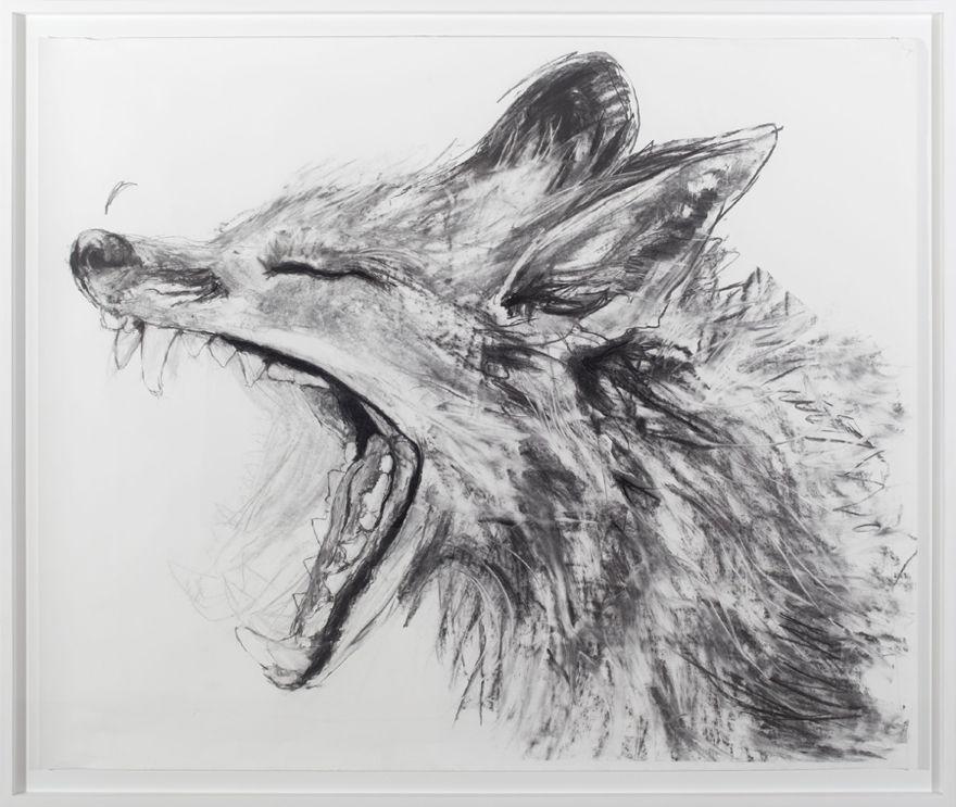 Urban Fox Studies series, 165cmx 195cm, Charcoal on paper, 2013, Jane Hughes