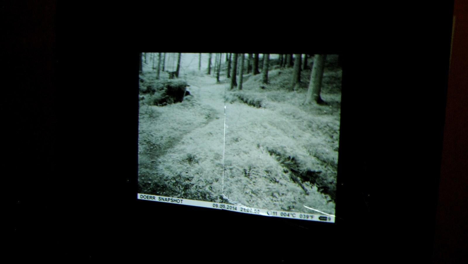 Video still, installation view, Gods & Demons of the Forest at Detroit Stockholm, Sweden, 2014, Jane Hughes